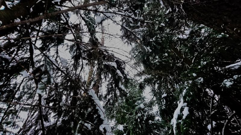 Лес 1 января 2019 2.JPG