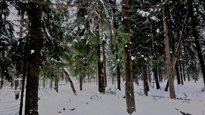 Лес 1 января 2019 4.JPG