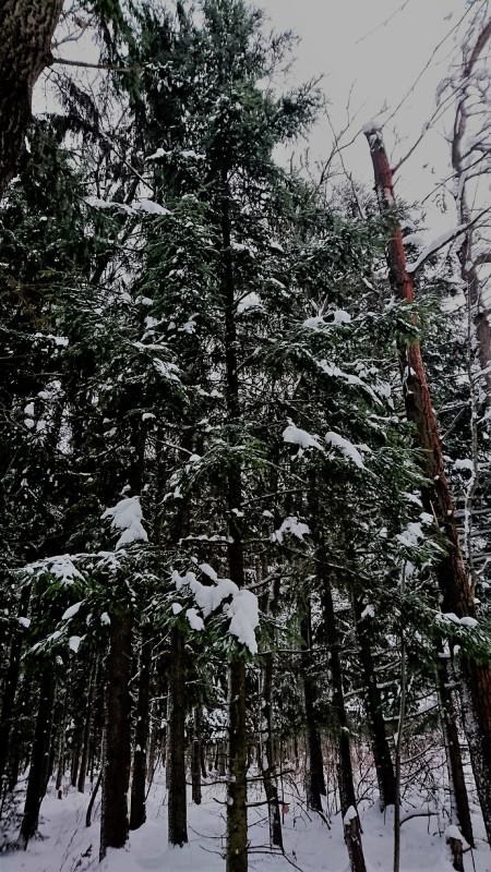 Лес 1 января 2019 5.JPG