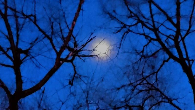 Луна 1.jpg