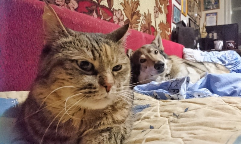 Джойка и Канис 17 марта 2019 2.jpg