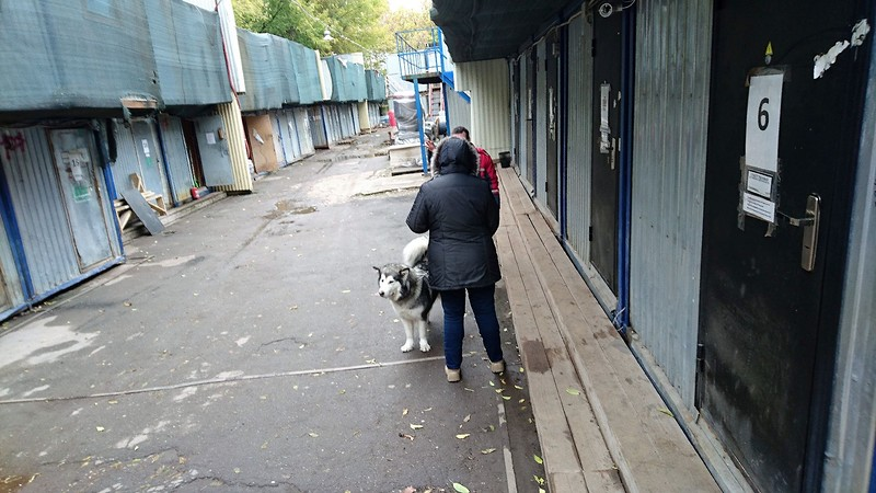 Карма Канис 15 октября 2017 4.jpg