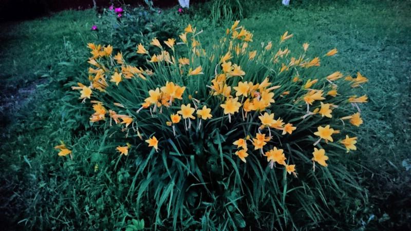 цветы 6 июня 2019 1.jpg