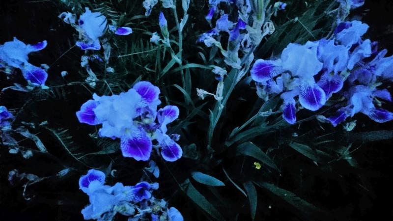 цветы 6 июня 2019 3.jpg