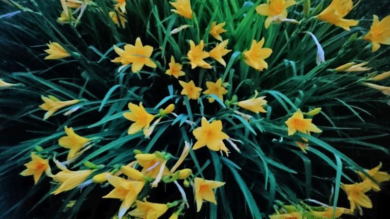 цветы 6 июня 2019 4.jpg