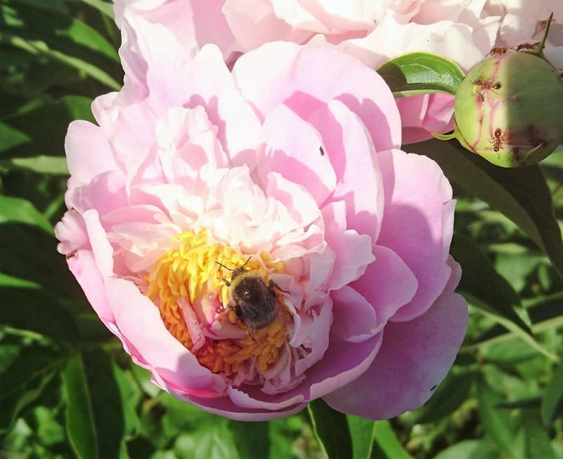 цветы 6 июня 2019 5.jpg