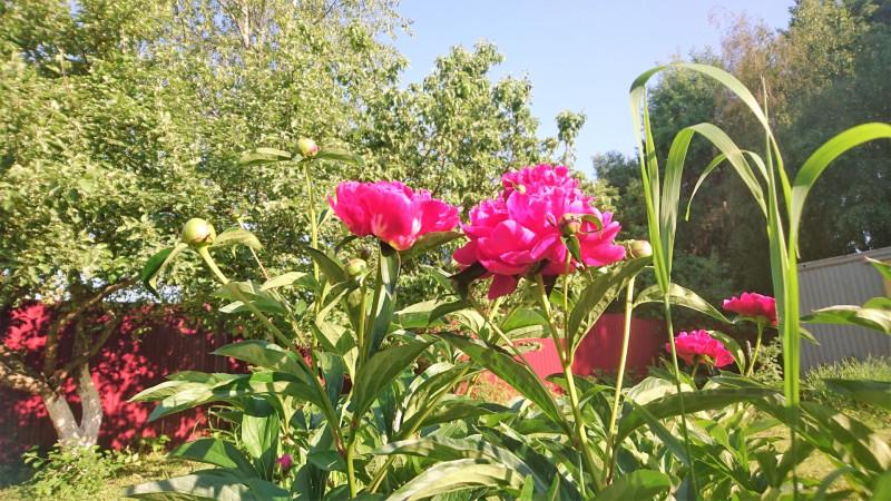 цветы 6 июня 2019 7.jpg