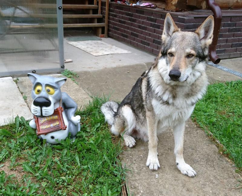 Канис и мультяшный волк.jpg
