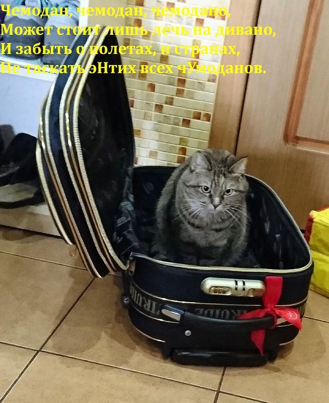 Джойка в чемодане.jpg