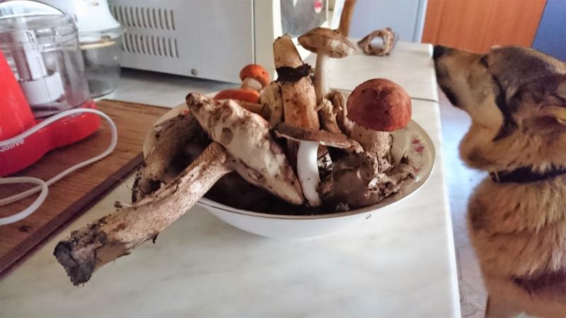 Собранные грибы 26 июля 2019 2.jpg