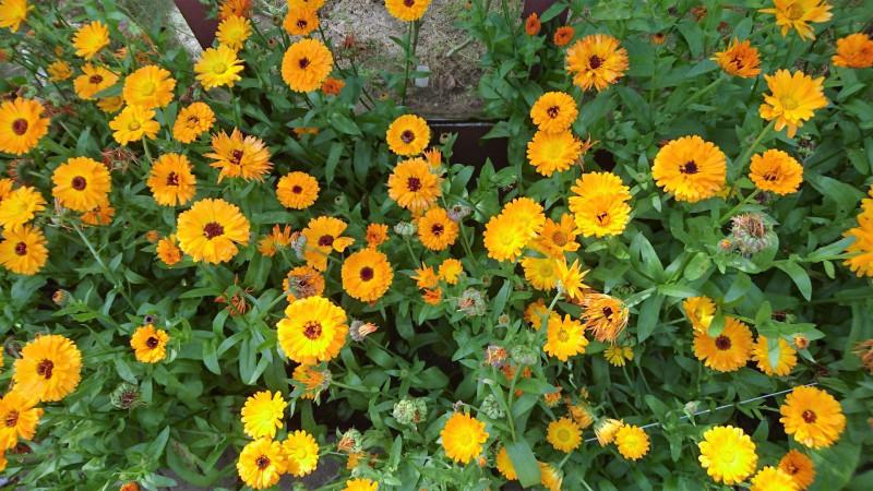 цветы 2 августа 2019 1.jpg