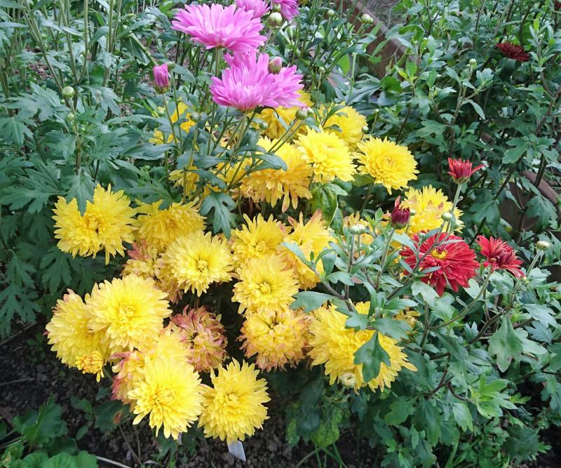 цветы 2 августа 2019 2.jpg