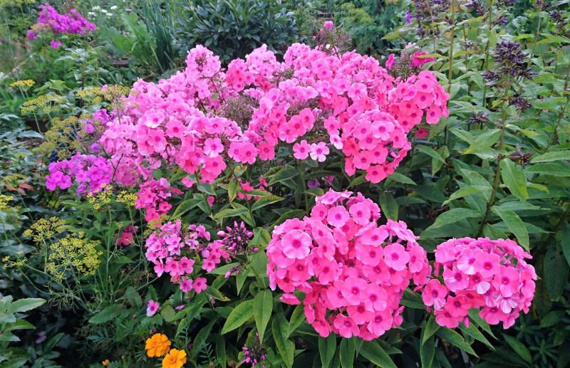цветы 2 августа 2019 6.jpg