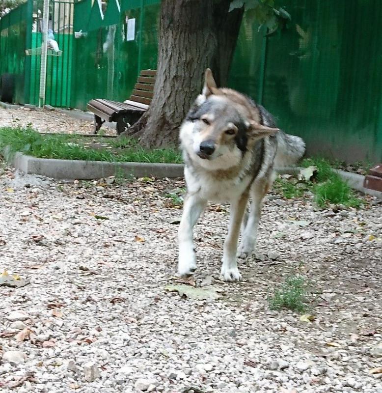 Канис собачья площадка 21 августа 2019 1.jpg
