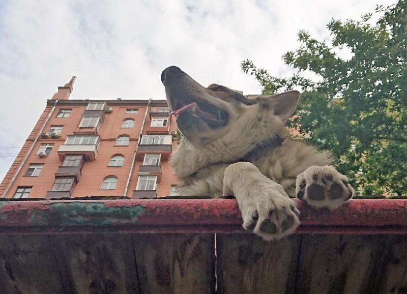 Канис собачья площадка 21 августа 2019 12.jpg