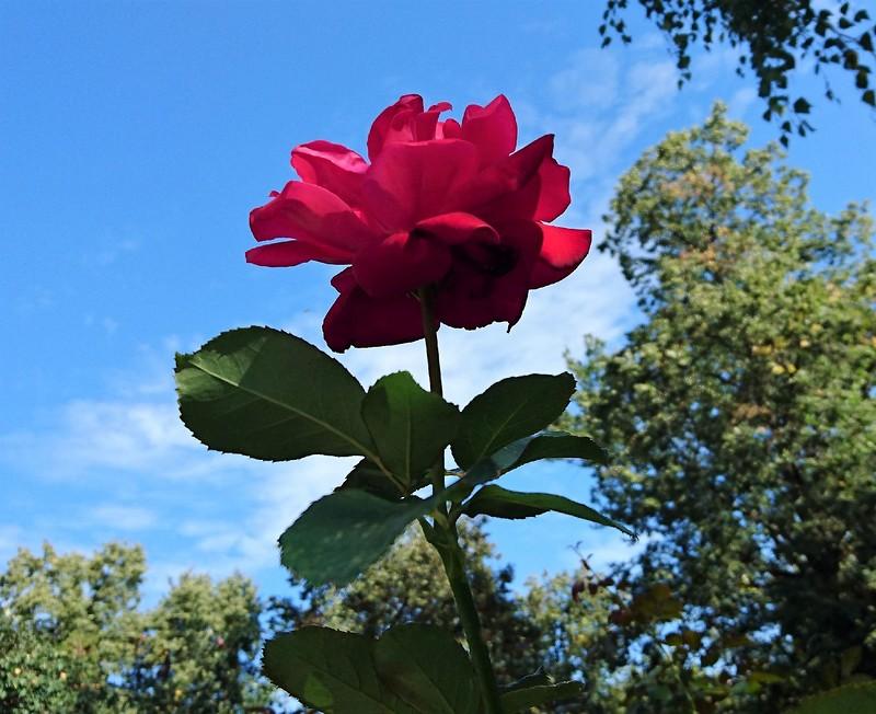 Цветы 4.jpg