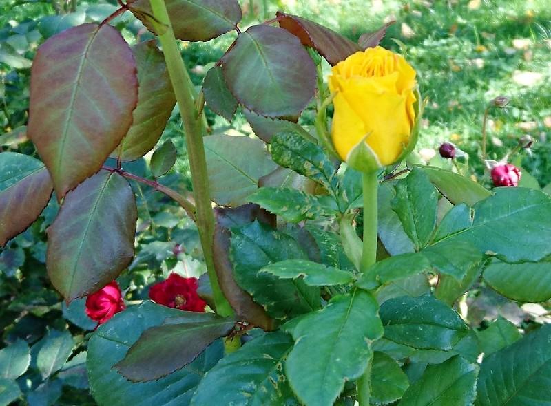 Цветы 3.jpg