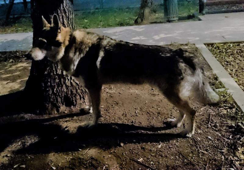 ночные волки 2.jpg