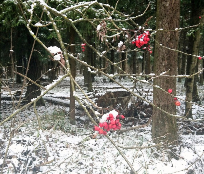 Канис в лесу 2 ноября 2019 7.jpg