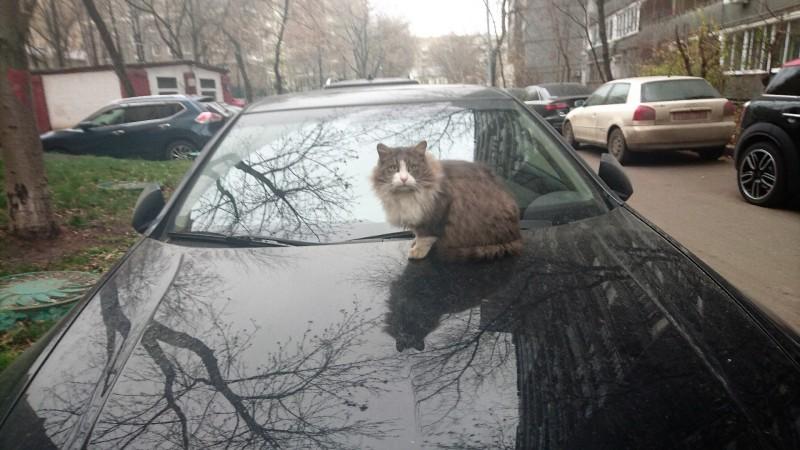 Кот на машине ноябрь 2019 2.jpg