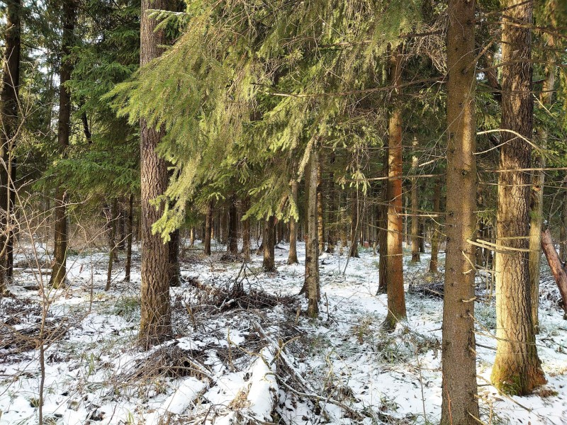 Лес 1 января 2020 1.jpg