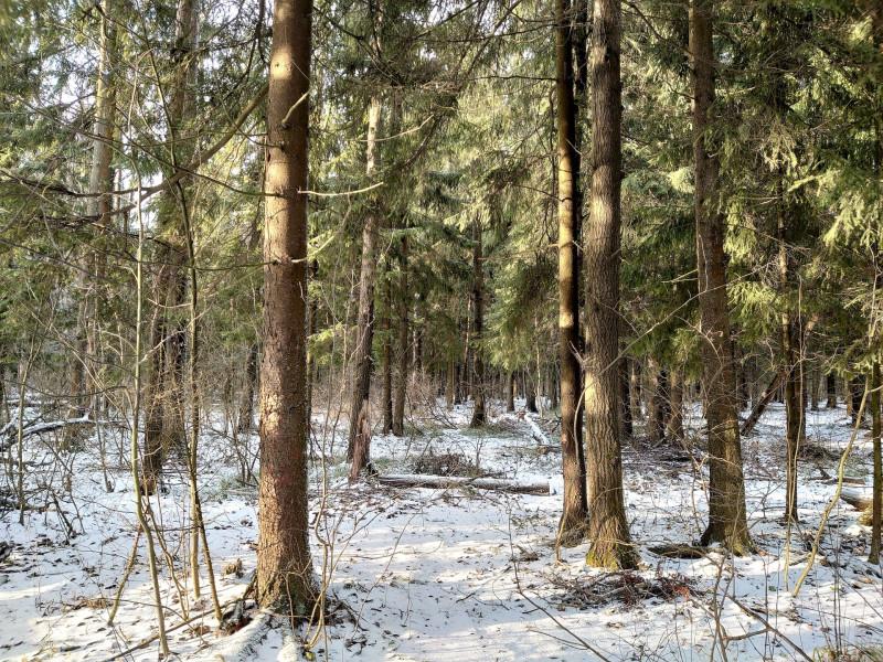 Лес 1 января 2020 2.jpg