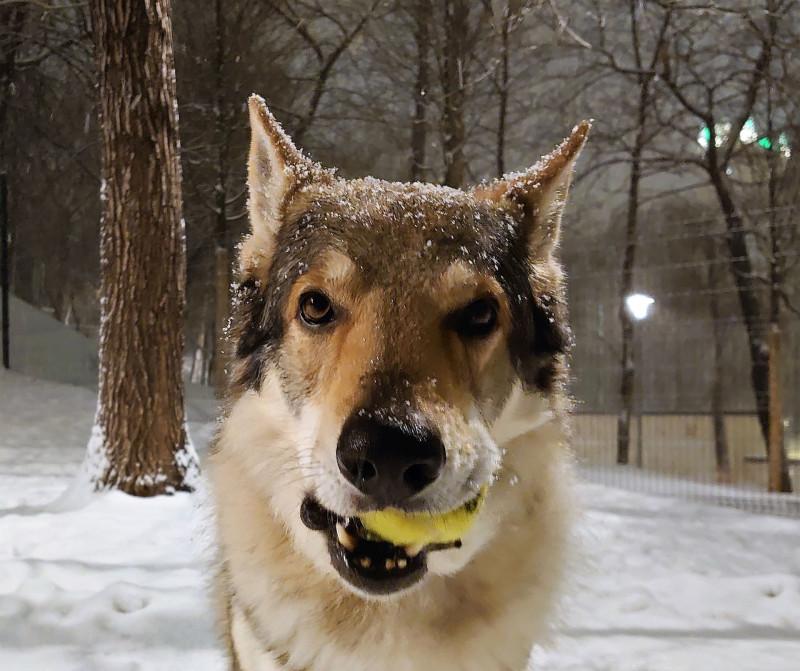 Каанис 30 января портрет с мячом 2.jpg