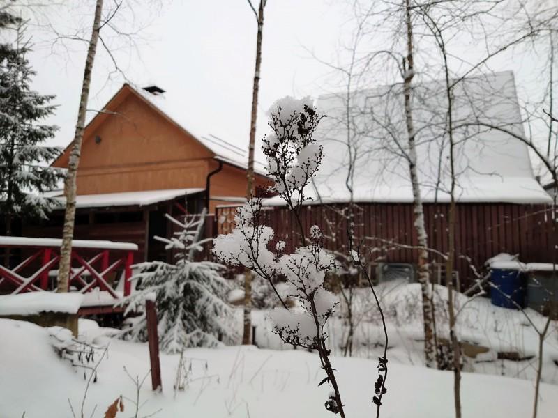 зимний лес 1 февраля 2020 3.jpg
