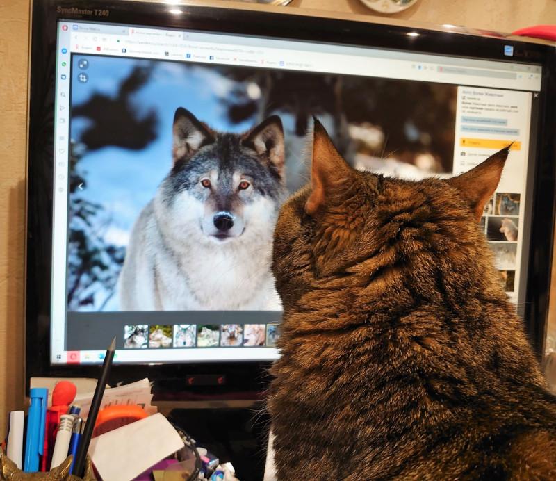 ДЖойка смотрит на волка 2.jpg
