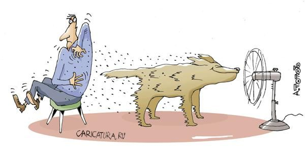 Карикатуры про собак 6.jpg