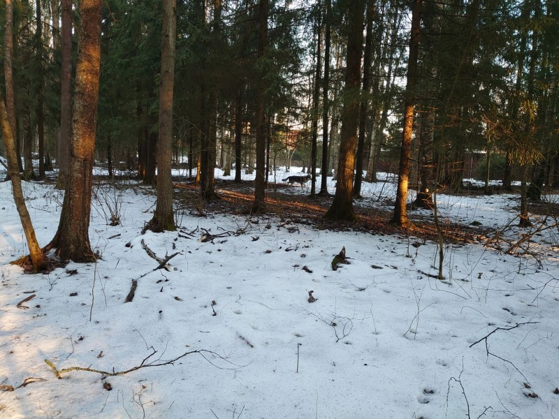 Весна в лесу 1.jpg