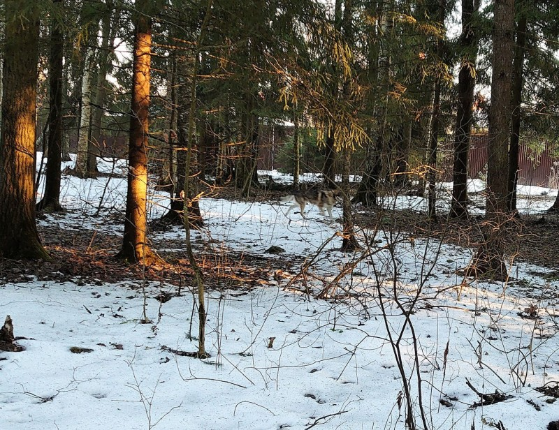 Весна в лесу 2.jpg