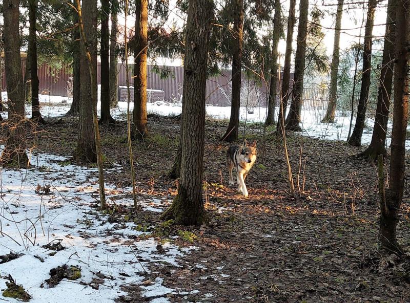 Весна в лесу 3.jpg