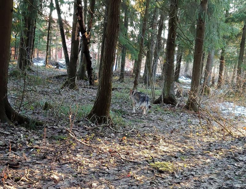 Весна в лесу 5.jpg