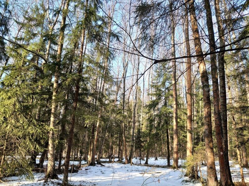 Весна в лесу 7.jpg