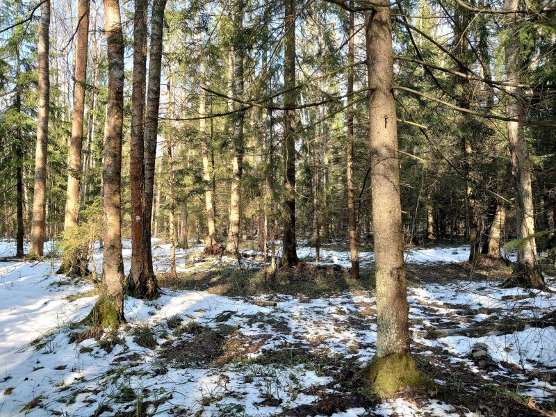 Весна в лесу 8.jpg