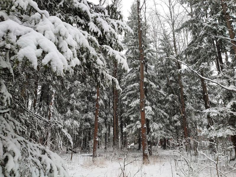 Зимний лес 23 февраля 2020 2.jpg