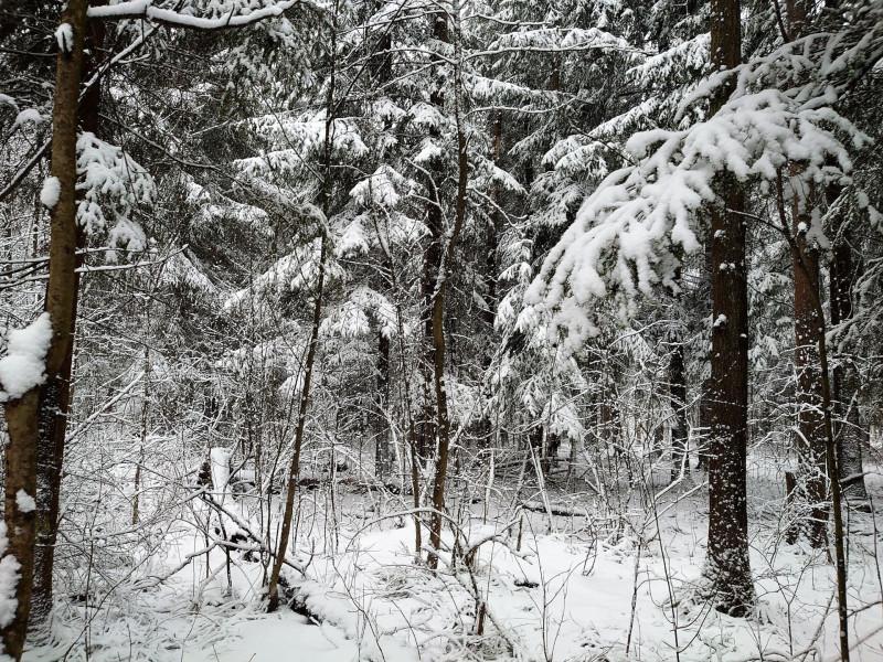 Зимний лес 23 февраля 2020 3.jpg