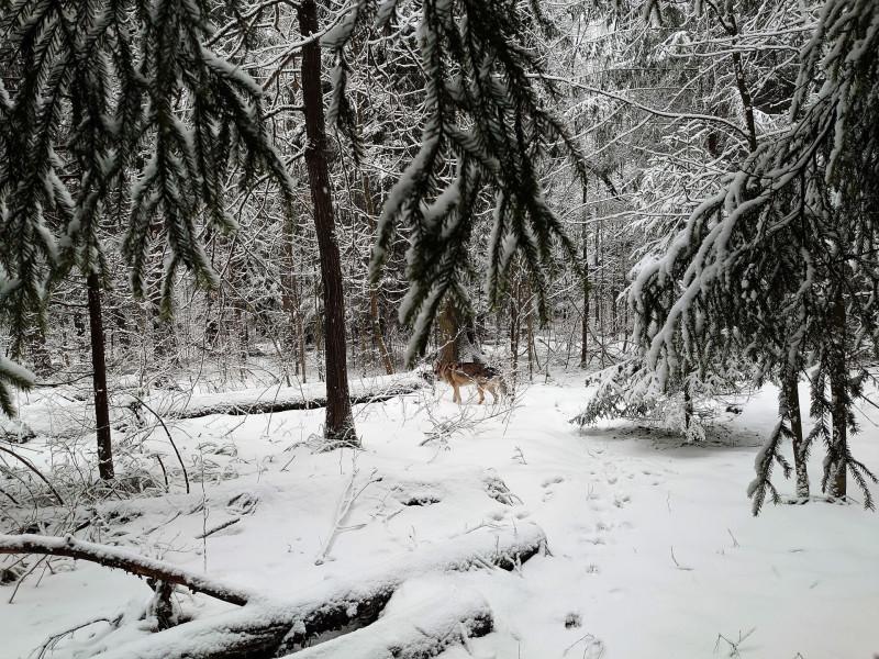 Зимний лес 23 февраля 2020 5.jpg