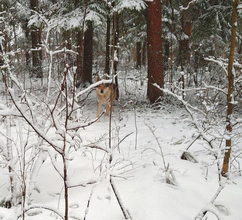 Канис в лесу 23 февраля 2020 1.jpg