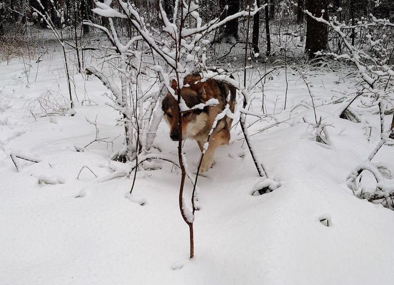 Канис в лесу 23 февраля 2020 2.jpg