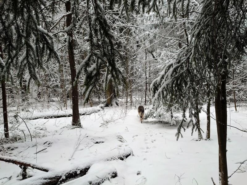 Канис в лесу 23 февраля 2020 4.jpg