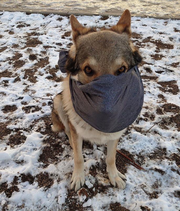 Канис маска от коронавируса 1.jpg