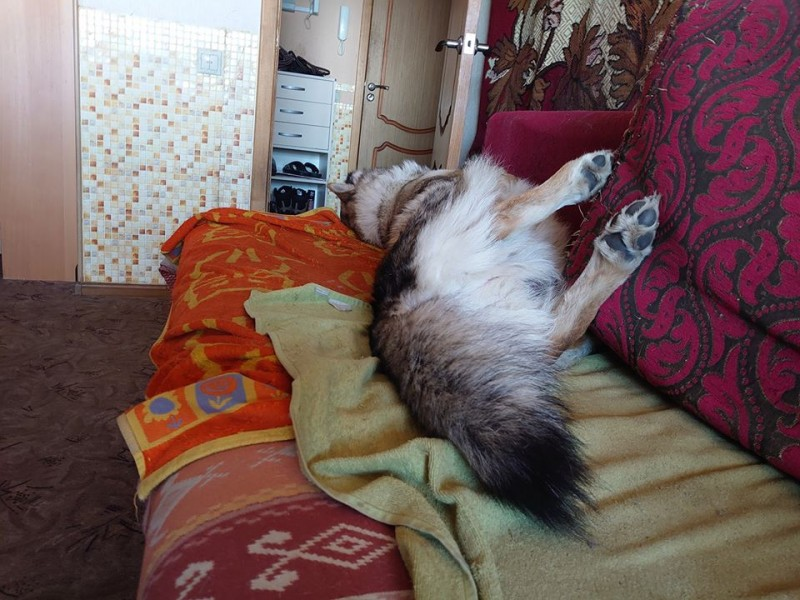 Канис на диване.jpg