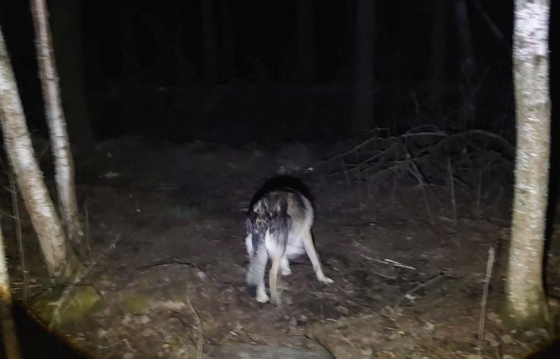 Ночной лес 3.jpg