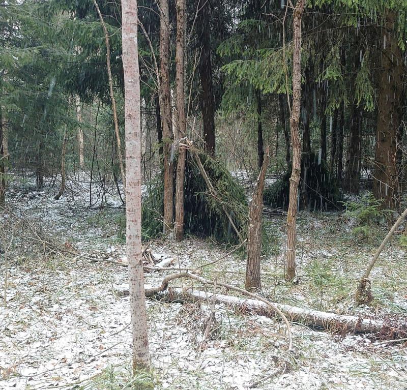 Лесной посёлок 30 марта 2020 2.jpg