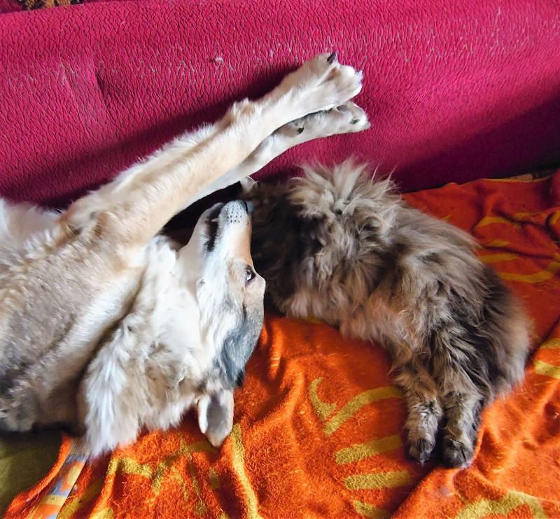 Ульси и Канис спят вместе. Апрель 2020 7.jpg