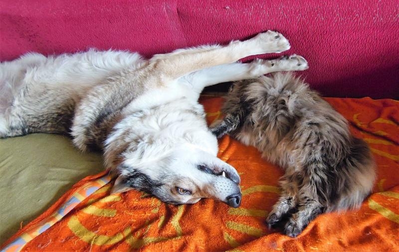 Ульси и Канис спят вместе. Апрель 2020 5.jpg