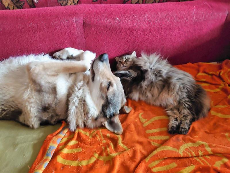Ульси и Канис спят вместе. Апрель 2020 1.jpg