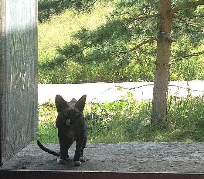 Первая глава кошка.jpg